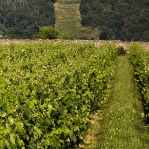 Clairmont vin Saint Georges